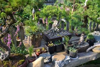 Gartenimpression 8