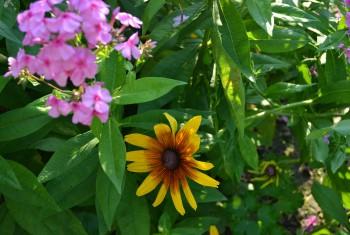 Gartenimpression 9